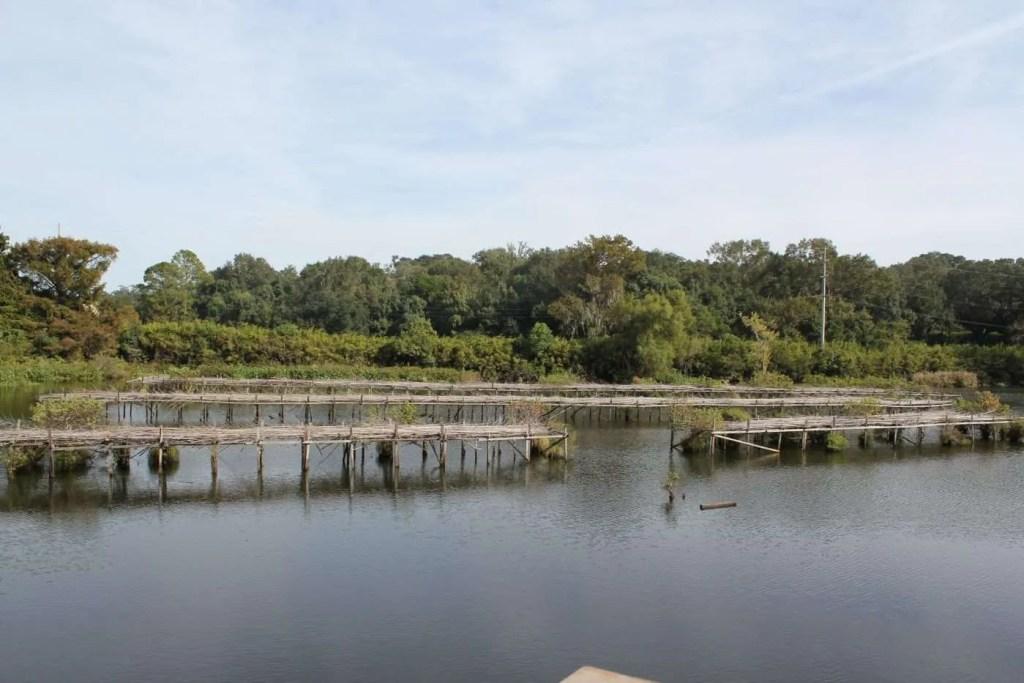 The empty rookery at Bird City on Avery Island.