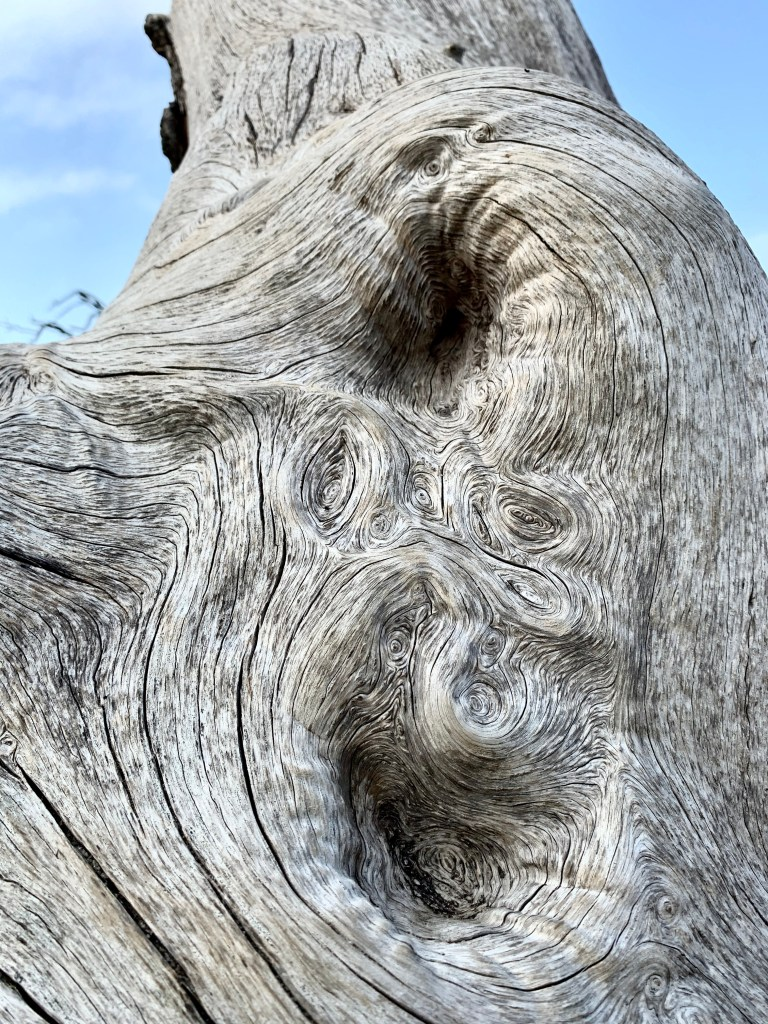 Cool knots on a tree at Driftwood Beach in Georgia.