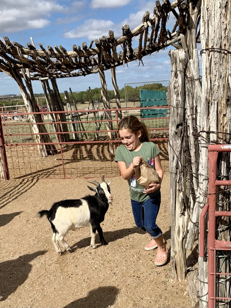 My little girl was scared of the goats in the petting zoo at Topsey.