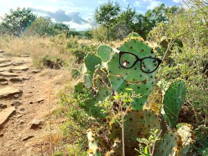 A cactus we saw on our hike to Gorman Falls in Colorado Bend State Park.