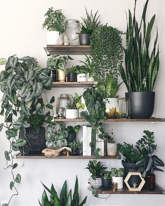 Plant shelves are perfect to decorate base housing.