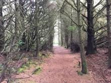 Trail between ocean side sites and ocean