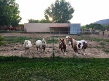 The horses at their house.