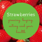 Strawberries – Growing, Buying, Eating, Health Benefits