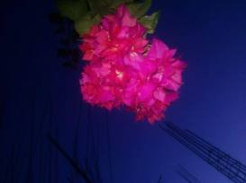 Cherei Athonba in my house