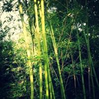 A Short Story 014 : Tharo-Angoubi