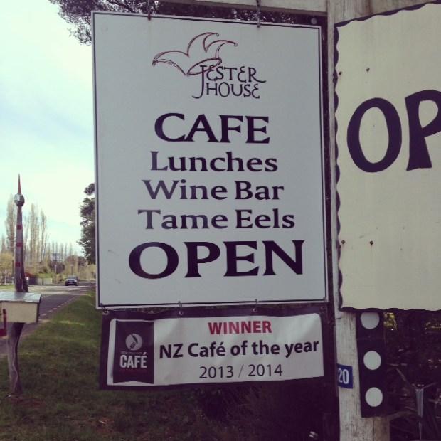 cafe jester eels