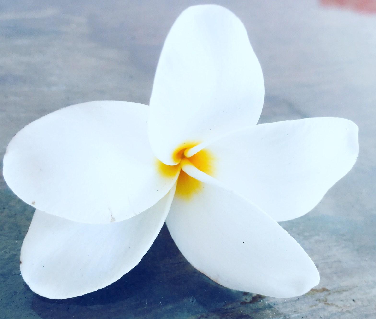 flower to express calmness