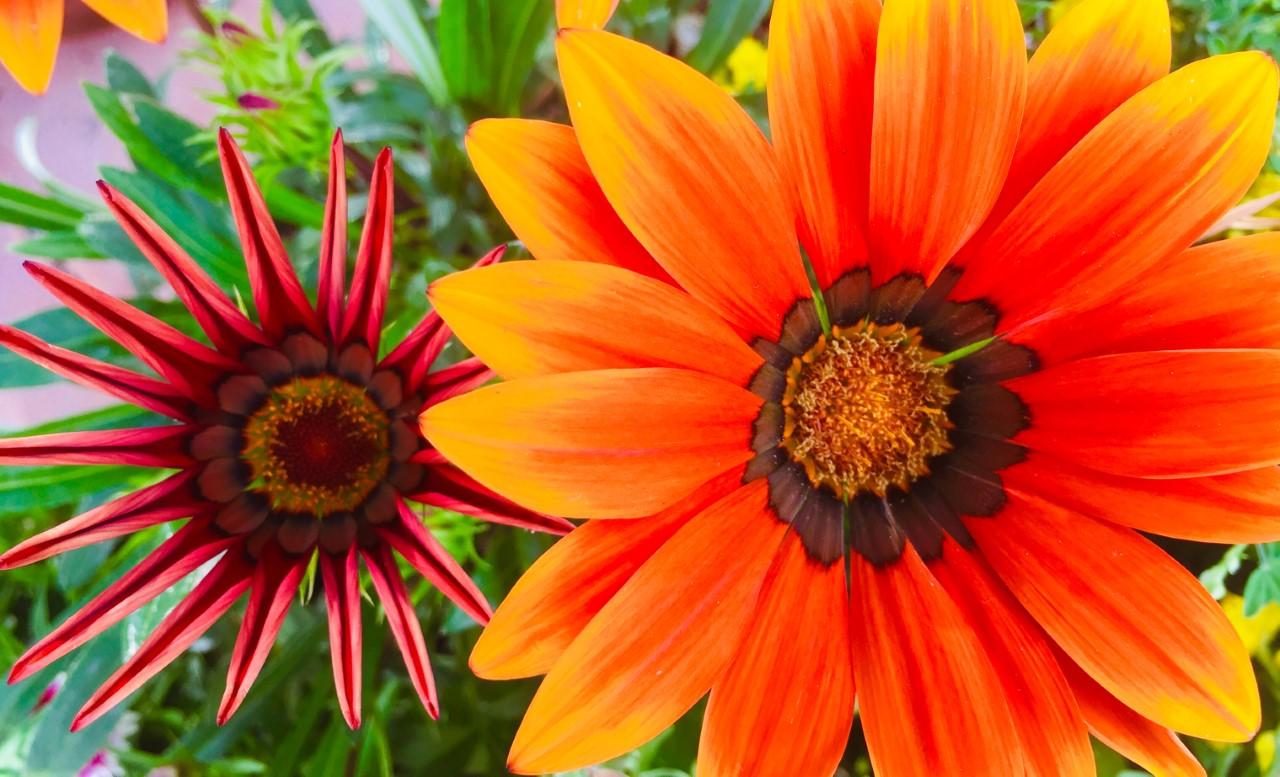inspiration flower