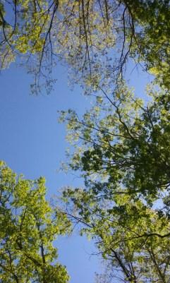 The Beautiful Sky (Photo #3)