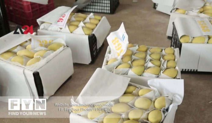 Farmers encounter difficulties due to the low price of mango