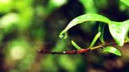 rainyday7