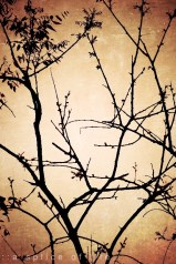 branches2.2
