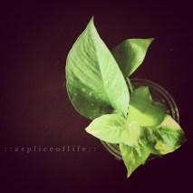 houseplant3.2