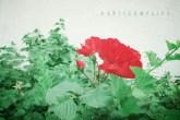 spliceflower3