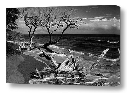 Beach Ocean Driftwood Nature Landscape Black and White Fine Art Canvas