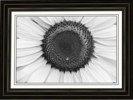 Sunflower Center Black and White Fine Art Frames Print