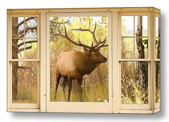 Bull Elk Window View Discover Beauty of Windows Scenic Views With Window Fine Art Prints