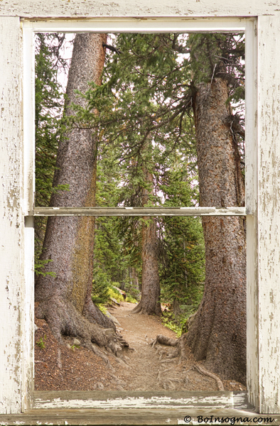 rocky mountain forest window 600s Interior Planning and Art Work Character Photography