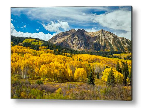 Colorado Rocky Mountain Fall Foliage Acrylic Art Print