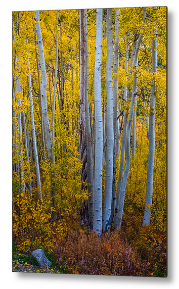 Golden Forest Portrait Metal Print