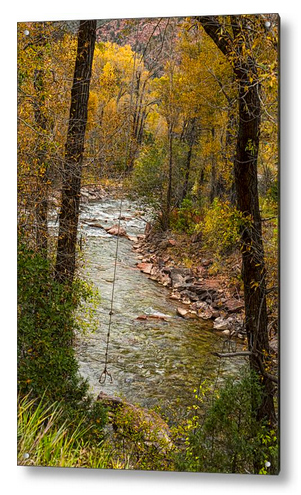 Trout Fishing Stream Crossing Swing Acrylic Print