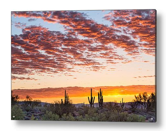 Colorful Sonoran Desert Sunrise Acrylic Art Print