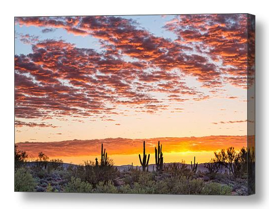 Colorful Sonoran Desert Sunrise Canvas Print