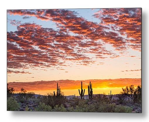 Colorful Sonoran Desert Sunrise Metal Print