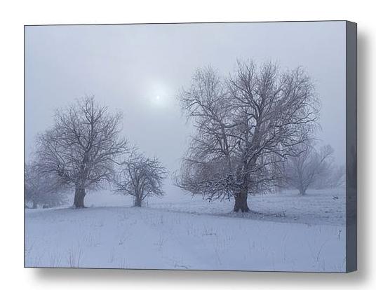 Snowy Foggy Sun Burning Canvas Print