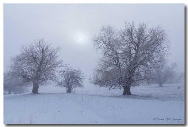 Snowy Foggy Sun Burning