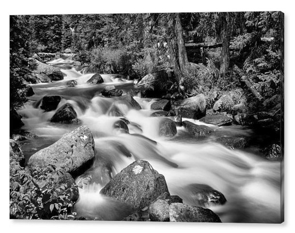 Cascading Rocky Mountain Forest Creek Bw Canvas Print