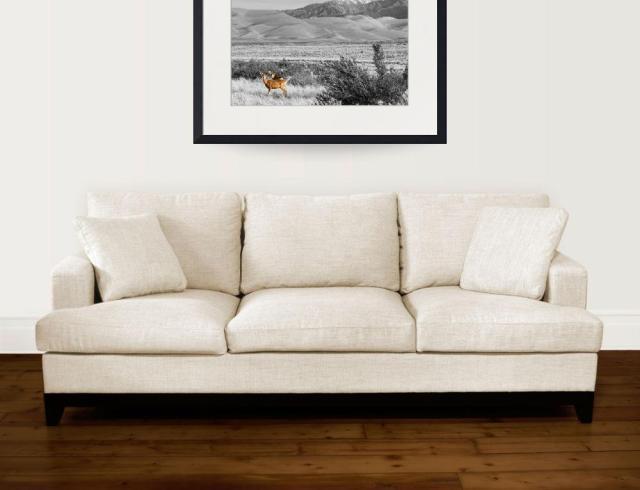 Great-Colorado-Sand-Dunes-Deer_art-print