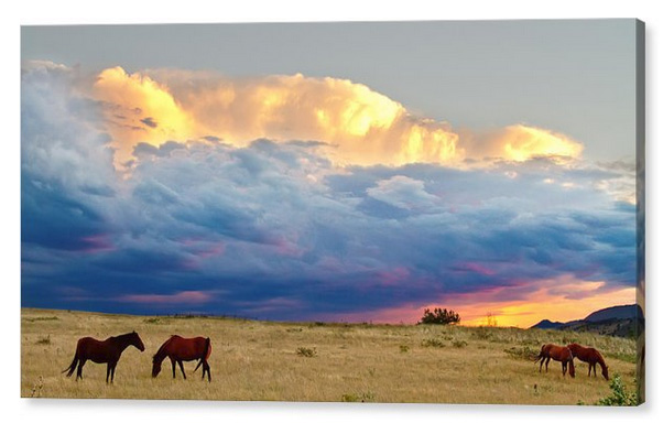 Horses On The Storm Panorama Canvas Print