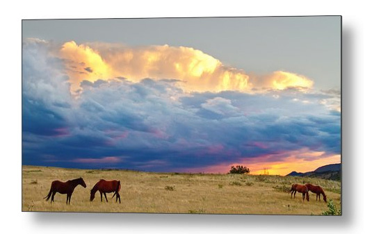 Horses On The Storm Panorama Metal Print