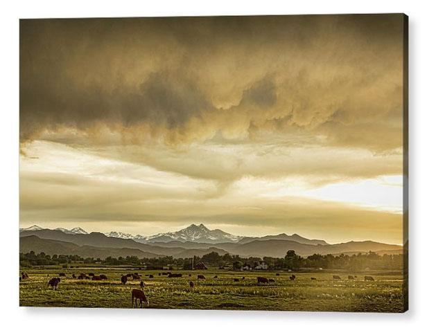 Colorado Grazing Acrylic Print
