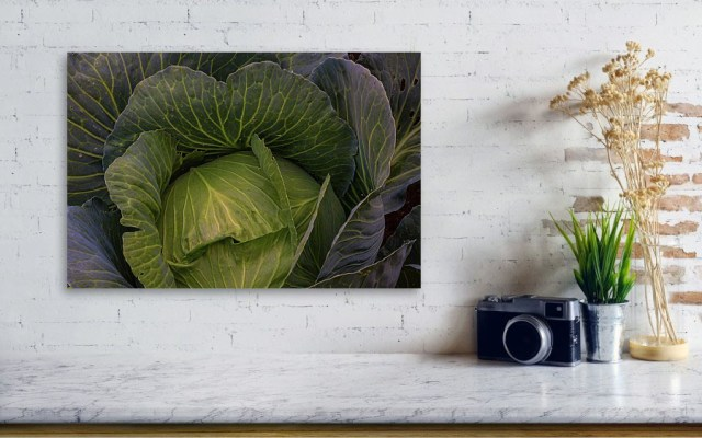 Fresh Raw Cabbage Artwork