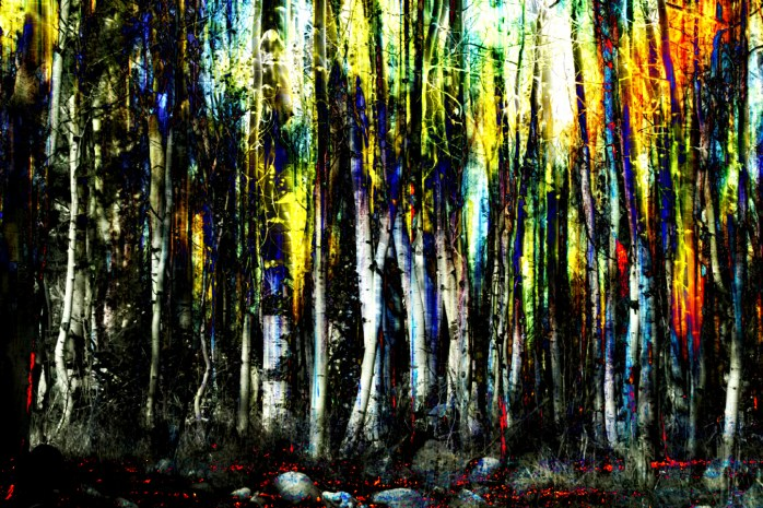 Art forest trees and woods