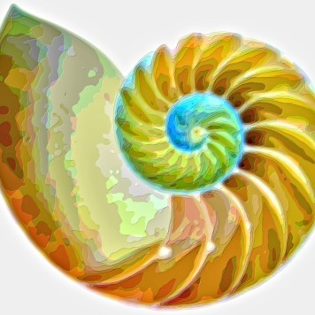 Spiral Seashell Layer Art Print