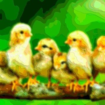 Bird Portrait Art Chickens