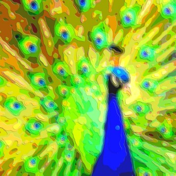 Bird Portrait Art Peacock
