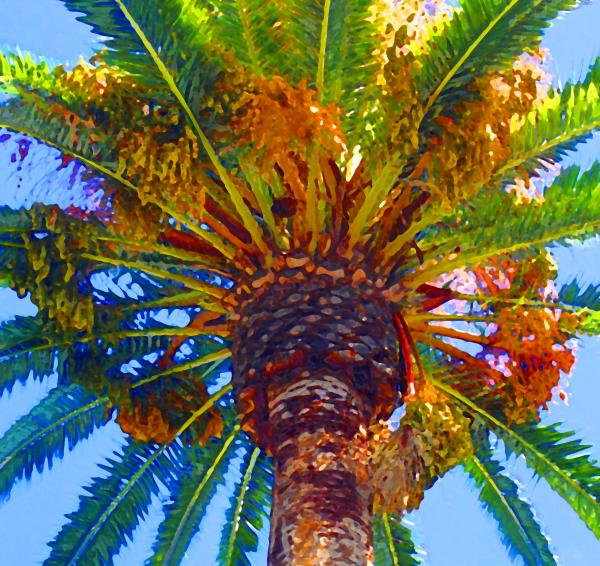 Looking up at Palm Tree  Painting  - Looking up at Palm Tree  Fine Art Print