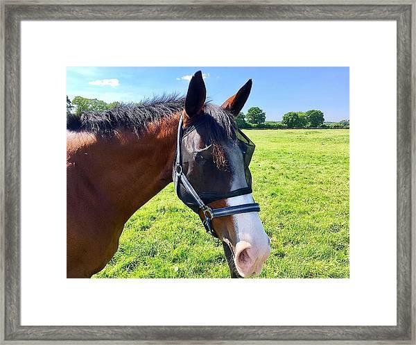 Hamburg Horses Framed Print by Marina Usmanskaya