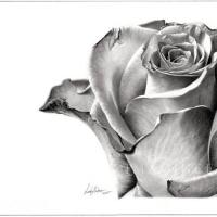 Floral Pencil Drawings
