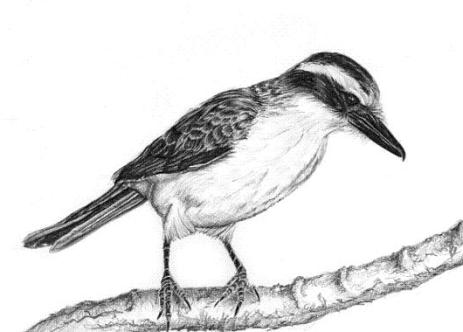 bird-drawing
