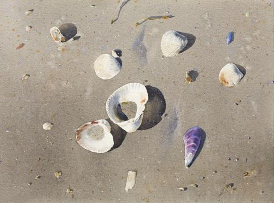 shell-paintings