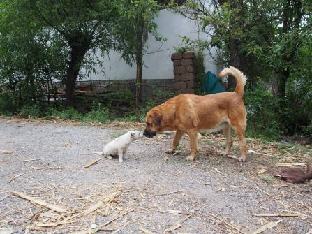 David and Goliath, in the version where Goliath was sweet natured, and David barked a lot.