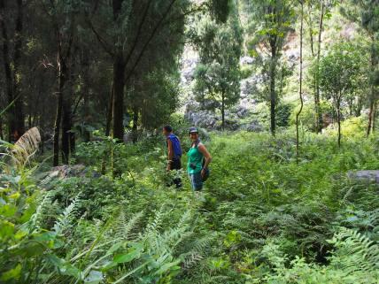 Green Hike.