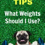 Trainer Tips: What Weights Should I Use?
