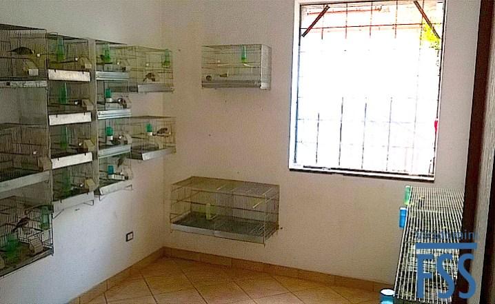 Paolo Vicidomini's birdroom